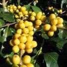 Brazil Yellow Bourbon Green (Unroasted) Coffee Bean