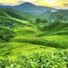 Organic Sampler Tea & Green Coffee Gift Set