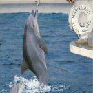 Marineland of the Pacific Southern California Postcard