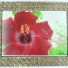 """Hand-crafted Natural Weave Picture Frame Two-ways (8""""x12"""" or 12""""x8"""") With Stand"""