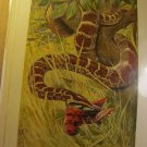 Python (Python Molurus), antique print,1907