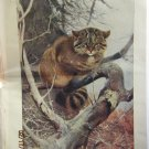 Euporean Wild Cat (Felis Catus), Antique Print, 1907
