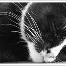 Cat Sleeping Digital Image JPEG
