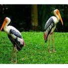 Standing Birds Digital Image JPEG