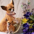 Chihuahua Figurine with Pup