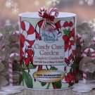 Candy Cane Garden Kit