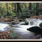 Vintage Postcard Mountain Stream in Autumn Grandfather Mountain Linville North Carolina