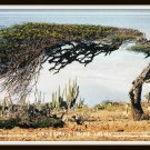 Vintage Postcard Greetings From Aruba 1980s