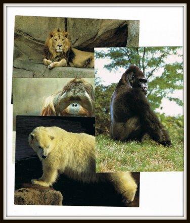 Vintage 1970s Postcards Chicago Lincoln Park Zoo Illinois