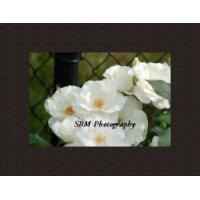 White Roses - Item, #20060020