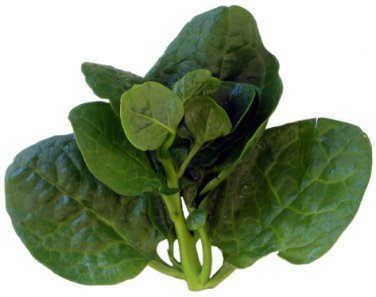 Vegetable seeds malabar spinach,CeylonGreen Vine,Basella alba ( Mong Toi ) 100 seeds
