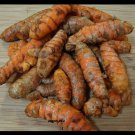 California  Fresh Herb Turmeric (Curcuma Longa) root, Bulbs Rhizomes .