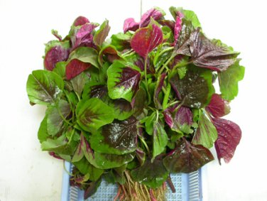 Asian Chinese Greens Spinach vegetable, EDIBLE RED AMARANTH :36000 seeds (30g)