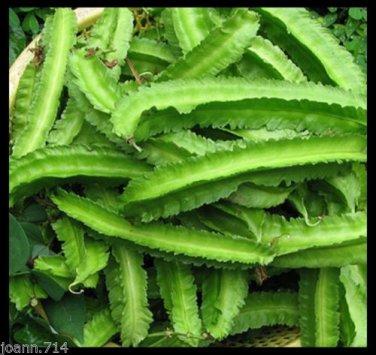 (100+) Winged bean, Four Angled bean, Manila bean,�ậu r�ng seeds