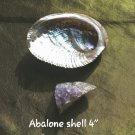 "ADD 4 "" inch MEDUIM  ABALONE SHELL"