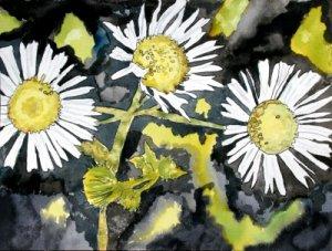 heath aster flower