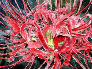 spider lily flower red giclee fine art print