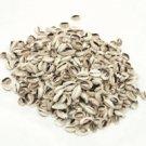 Kenyan Cowrie Shells: Cut - 1 Kilo Bag