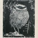 1985 Joseph Raffael Listening to Evening 1985 Art Exhibition Ad Advert Gibbes Art Gallery