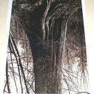 Rodney Graham Stanley Park Cedar No. 6 Art Ad Advertisement