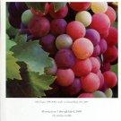 Gus Heinze 1997 Art Exhibition Ad Advert Arbor Grapes
