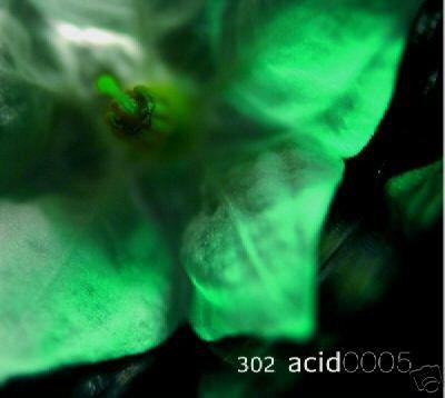 302 ACID 302 ACID 0005 EVEN CALLS DUB AMBIENT CD