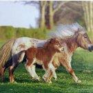 Mini Shetland Pony Mouse Pad