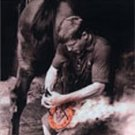 Fundamentals of Draft Horse Shoeing - DVD