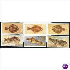 John Player and Sons Sea Fishes Vintage Cigarette Cards Collection