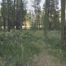 Trail Behind My House