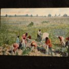 "Black Americana Postcard  ""A Hot Summer Day in Dixie""  Picking Cotton  1911"