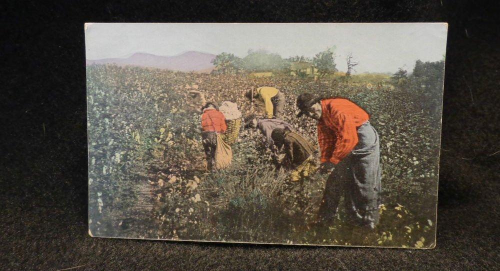 "Vintage Black Americana Postcard  ""Picking Cotton in Alabama"" Unused Split Back"