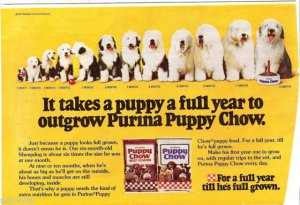 1978 Old English Sheepdog 1 month to 12 month growth schedule Dog/Puppy Chow Ad