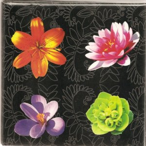 New 4 Dashing Flowers Greeting Cards or Notecards - 6 Pack