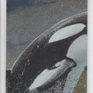 Chase Card insert Trading Card Single 1995 Skybox Free Willy #SP2 *ED