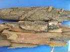 White Willow Bark P.E Salicin 20%