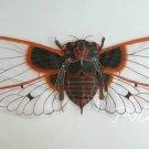 "Exquisite 62"" Giant Snowy Cicada Kite Art Deco Gift"