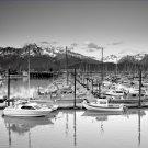 Black and White Photo 8X10 Marina Seward Alaska