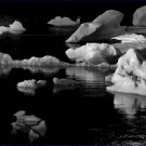 Black and White Photo 8X10 Floating Ice