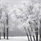 Black and White Photo 8X10 Foggy Winter Day at Bear Lake