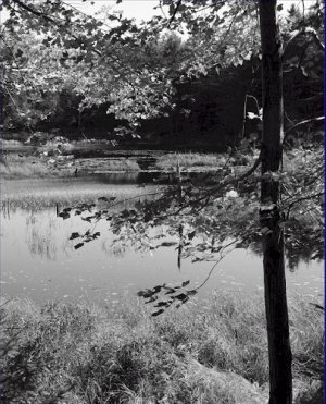 Black and White Photo 8X10 Changing Leaves Acadia National Park