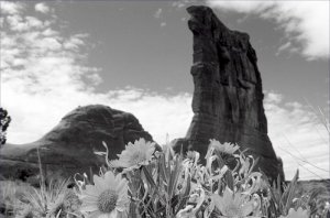 Black and White Photo 8X12 Mules Ears and Courthouse Towers