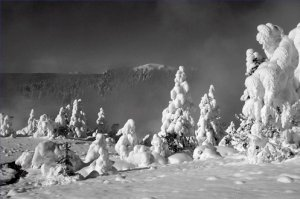Black and White Photo 8X12 Yellowstone Winter in the Norris area