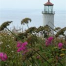 North Head Lighthouse Washington Poster 20X30 Art Print