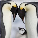 Emperor Penguins Chick Antarctica 20X30 Poster Art Print