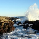 Acadia National Park Ship Harbor Wave 11x14 Photograph