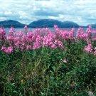 Acadia National Park Baker Island 8X10 Photograph