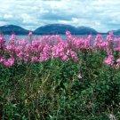 Acadia National Park Baker Island 12x16 Canvas