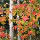 Acadia National Park Fall Colors 11x14 Photograph