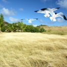 Pinel Island 1 - 8 x 10 Color Print
